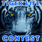 TSU Tiger Life Contest channel